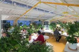 Biophilia: humans innate desire to connect with nature